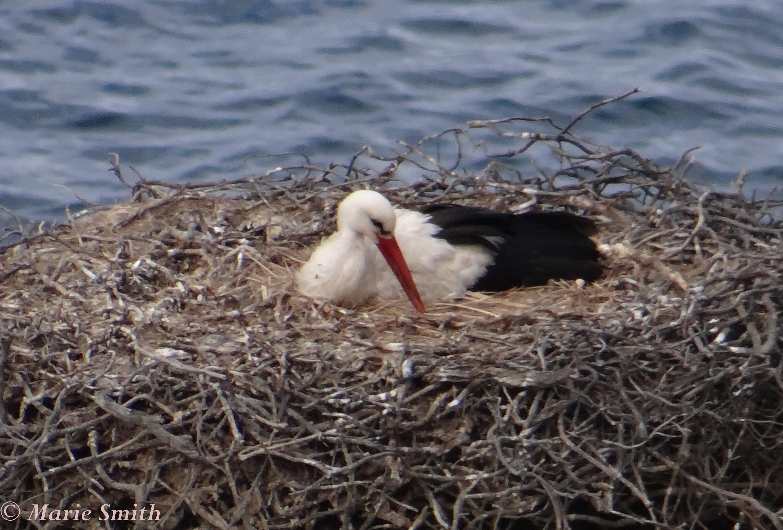 Rota-Vincentina-Stork
