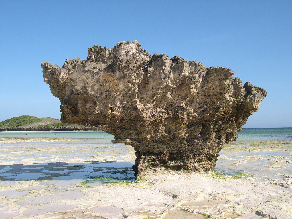Coral at Watamu Beach