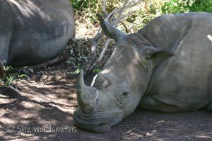 Africa-rhino-conservation
