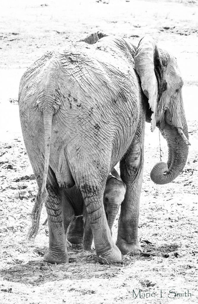 Example of unser exposed elephant photography taken on my birthday trip