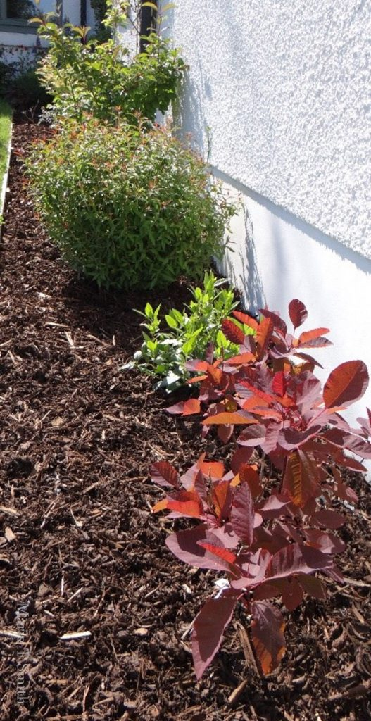 Showing you can grow shrubs in a hillside garden