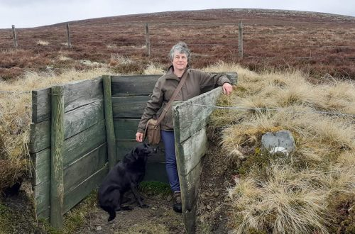 Get creative as Marie walks into the hills with her dog for daily exercise